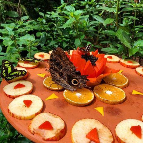 Es gibt über 3 Millionen Schmetterlingsarten in #Brasilien 🇧🇷 und davon…