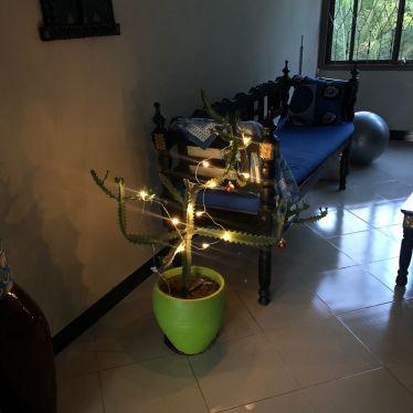 Kaktus mit Lichterkette