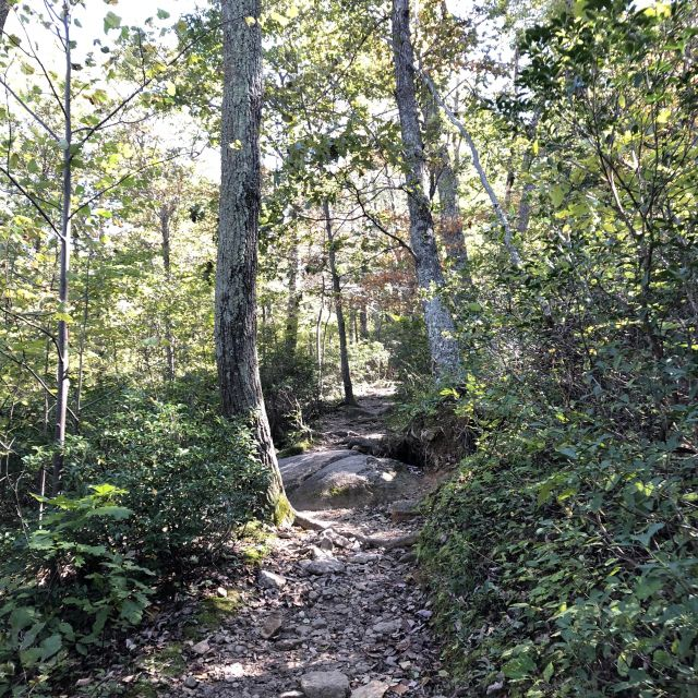 Ein Waldweg in den USA.