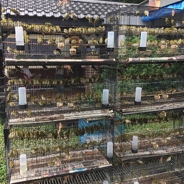 Und täglich grüßten die Vögel #singapur #singapore #erlebees…