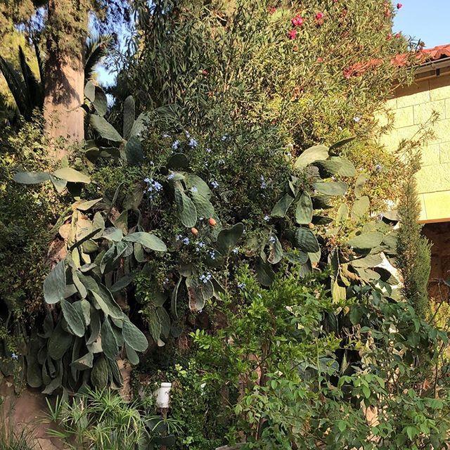 Gestern war bei uns in #Israel das jüdische Neujahrsfest der Bäume, Tu…