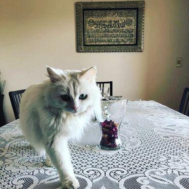 Basbousa ist mit ihren kleinen dicken Pfoten noch süßer als das ägyptische…