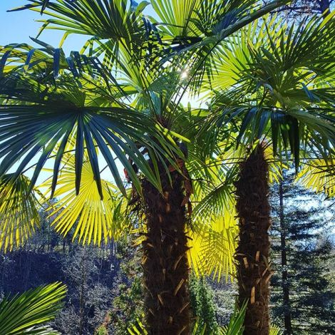 Unter Palmen in den Alpen 🇮🇹⛰🌴 #perfectmatch #südtirol #meran…