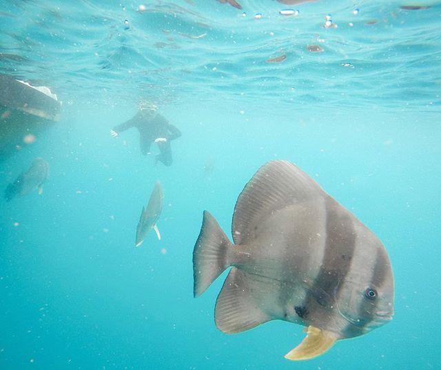Big fish & mini me 🐠🤙🏼 . #snorkeling #whitsundays #erlebees