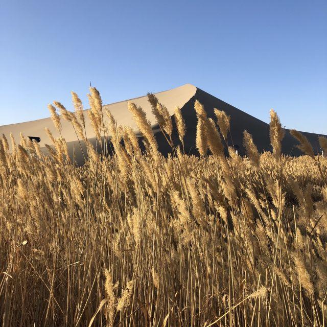 Malerische Dünne mit Getreide