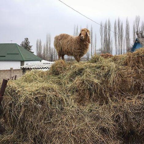 Schaf möcht' ich gern sein... 🐑 Seit gestern fahren wir wieder täglich…