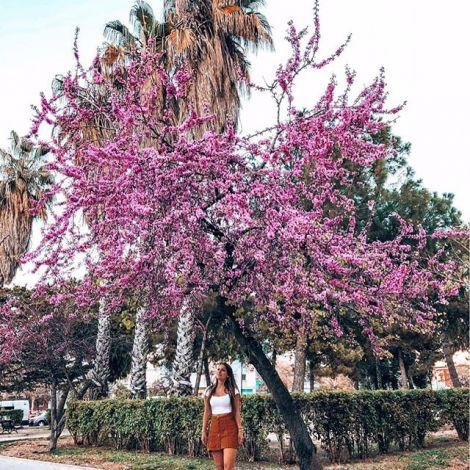 Studentin Tamara unter einem blühenden Kirschbaum in Valencia.