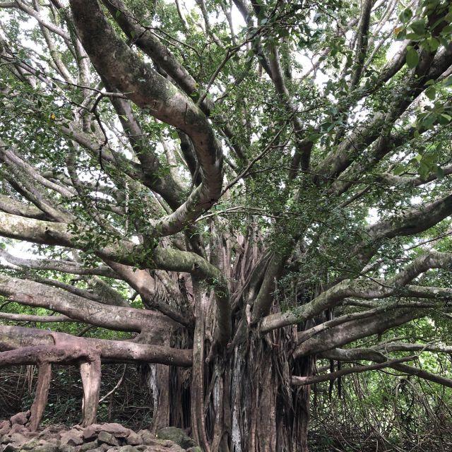Regenwald, Maui