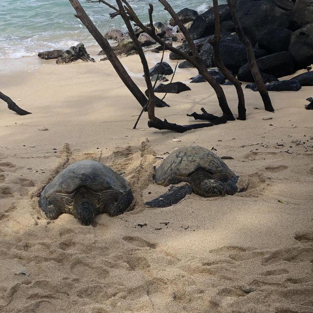 Grüne Meeresschildkröten, Maui