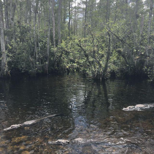 Alligatoren nahe der Loop Road