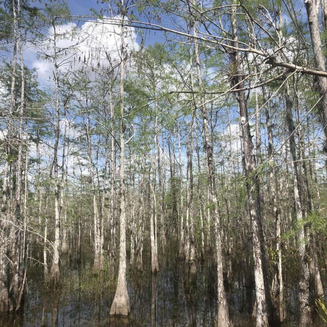 Vielfältige Vegetation in den Everglades