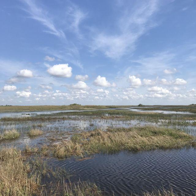 Endloses Sumpfgebiet