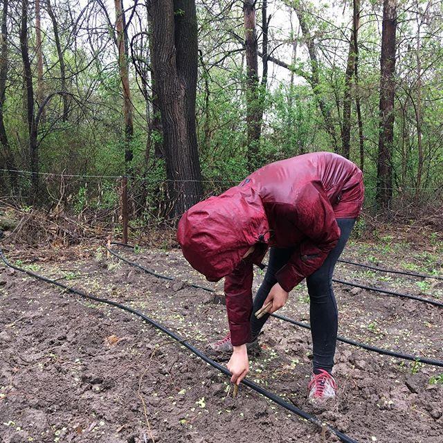 Diesen Samstag habe ich mit #Bäume pflanzen verbracht. Es hat zwar geregnet,…