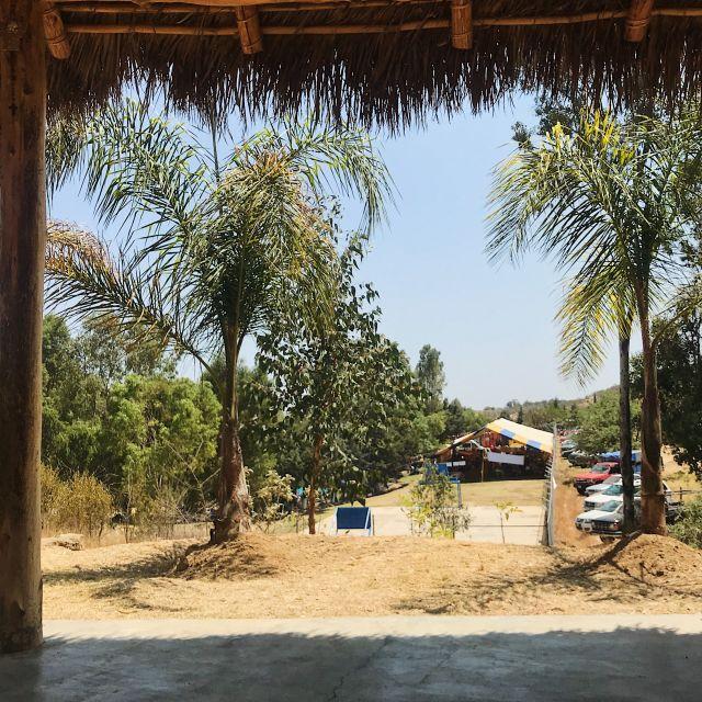 Sonniger Ausblick auf Palmen