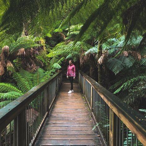 Rainforest walk 💧.…