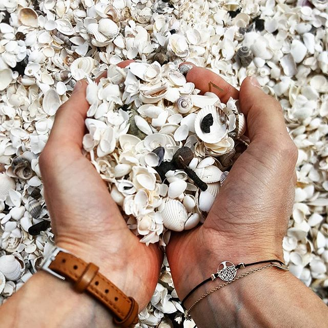 Beach treasures 🐚 #ErlebeEs #dänemark #beachdays