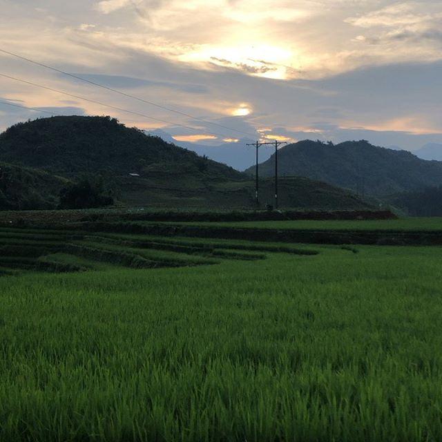 #erlebees #vietnam #amazing