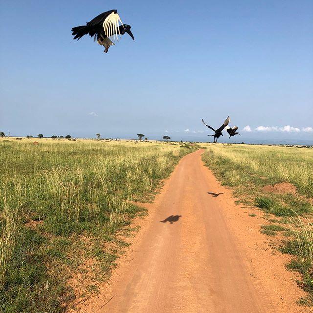Ich versuche gerade einen Blogartikel über meinen Ausflug in den Murchison…