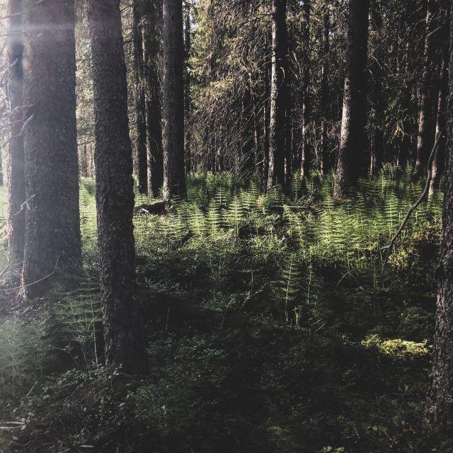 Farngewäche im Wald in der Abendsonne