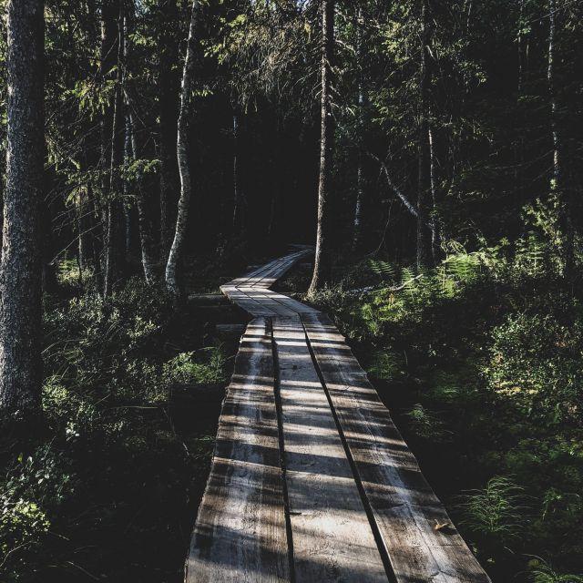 Holzplankenweg durch einen Wald