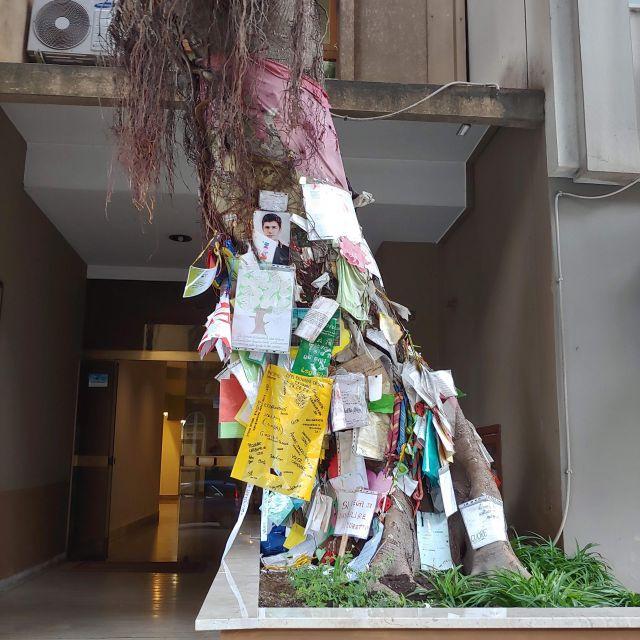 Der sogenannte Falcone-Baum, an denen Plakate gegen die Mafia angebracht sind, ist ein Symbol des öffentlichen Widerstands gegen die Mafia. Im Wohnhaus dahinter wohnte Giovanni Falcone und seine Ehefrau, die beide einem Bombenattentat zum Opfer fielen.