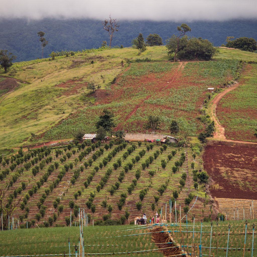 Anbaufelder vor Mae Hong Son