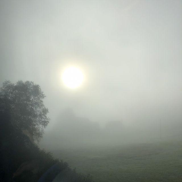 Bäume sind umgeben von einem einem grauen Nebelschleier. Die Sonne erscheint als greller Punkt durch die Nebelwand hindurch.