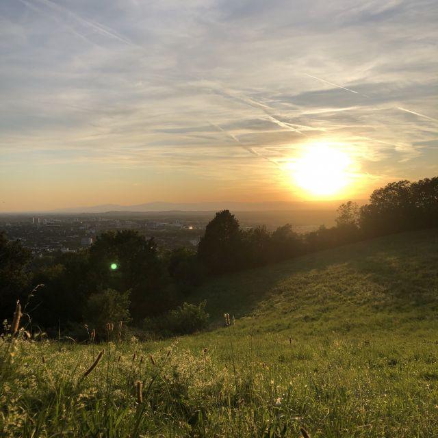 Von einer grünen Wiese sieht man, wie die Sonne untergeht über Freiburg. Der Himmel färbt sich von blau zu orange.