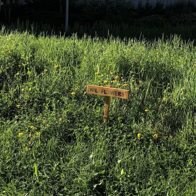 Wildblumen für Bienen auf dem Campus - die University of Strathclyde ist eine der nachhaltigsten Unis der Welt.