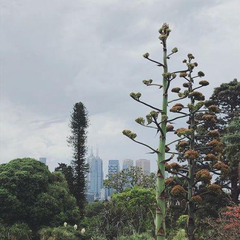 Weekend vibes in #Melbourne 🌿 #ErlebeEs #studierenweltweit #auslandssemester