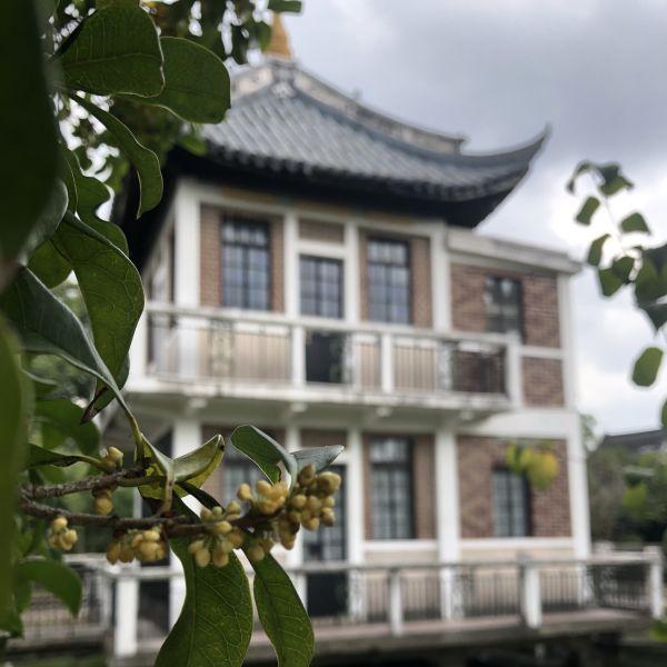 Die Duftblüte Guihua