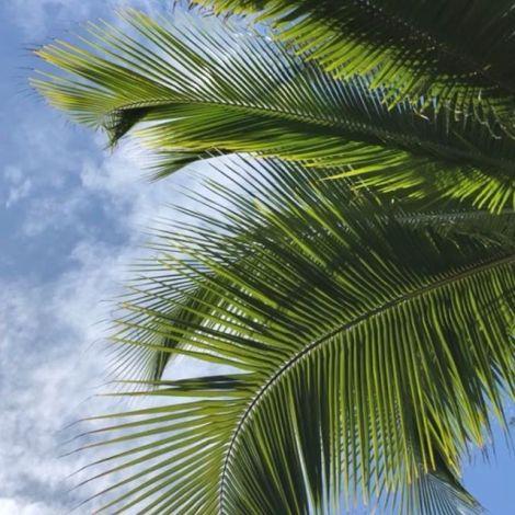 Tropische Grüße von La Réunion 🥥🌴🐚 der Sommer beginnt hier langsam,…