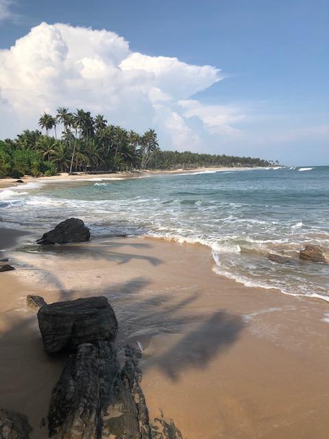 Sommer, Sonne, Strand und Kokosnüsse