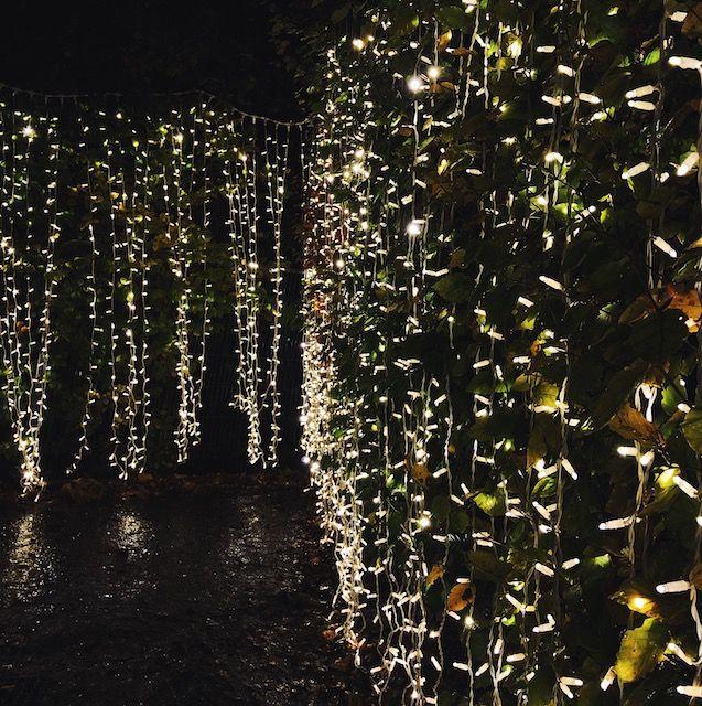 Der Botanische Garten wird für 'Glasglow' unterschiedlich beleuchtet.
