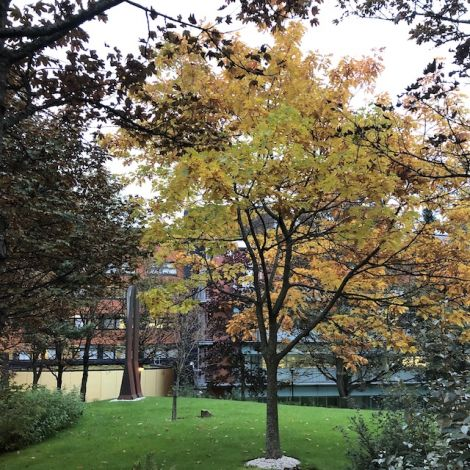 Der Herbst ist da - Das bedeutet neben kurzen und kalten Tagen aber auch, dass sich die ganze Stadt gelb, rot und orange färbt. So sieht der Blick auf meinen Unicampus aus.