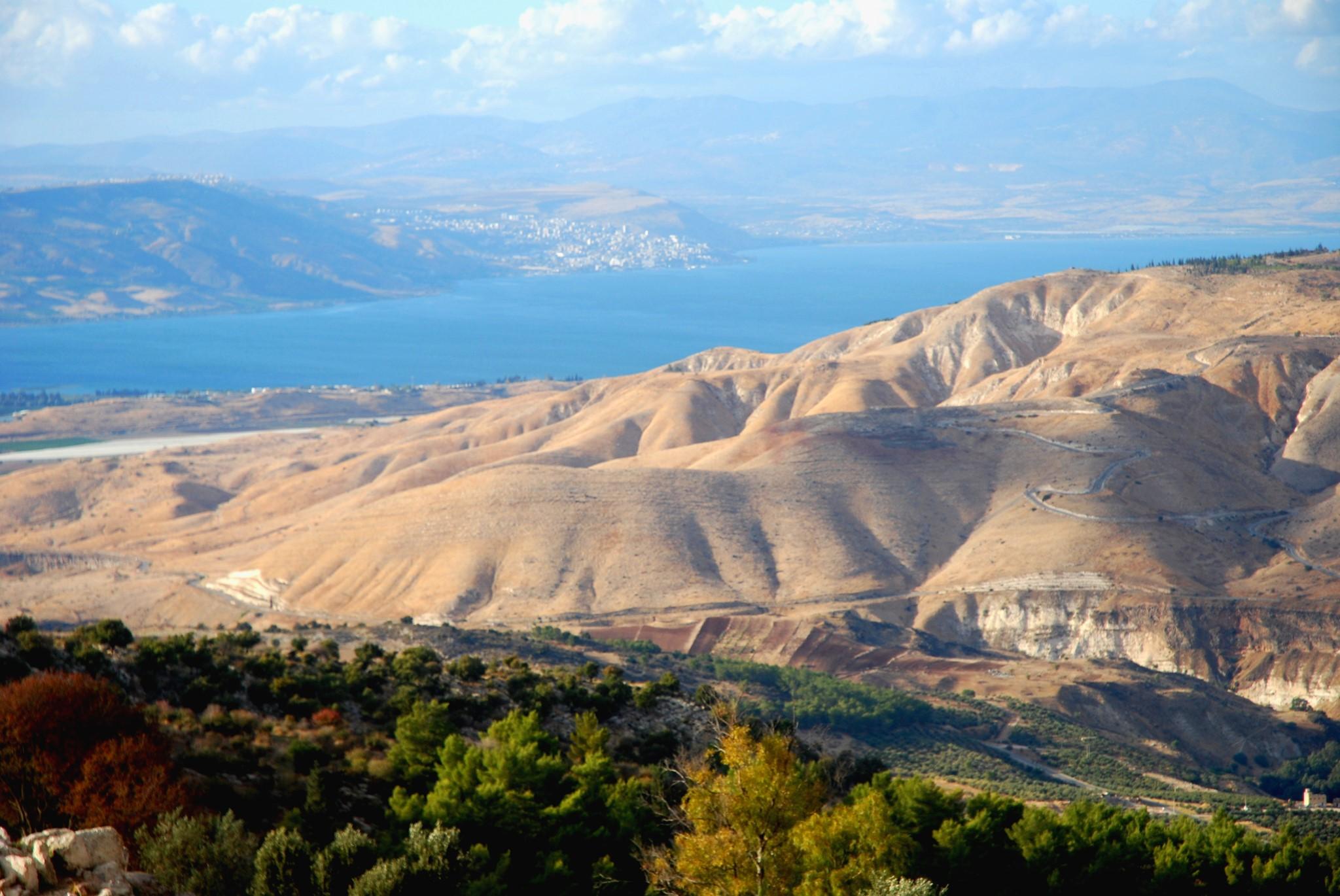 3 Länder in 3 Bahnen mit 3 Farben: Grün (Olivenhain in Jordanien in Umm…