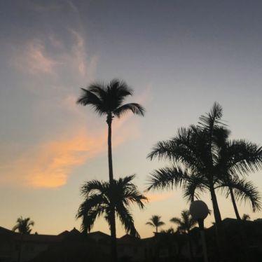 Sonnenuntergang mit Palmen in Acapulco