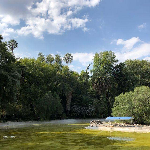 Kleiner Teich im Parque España (La Condesa)