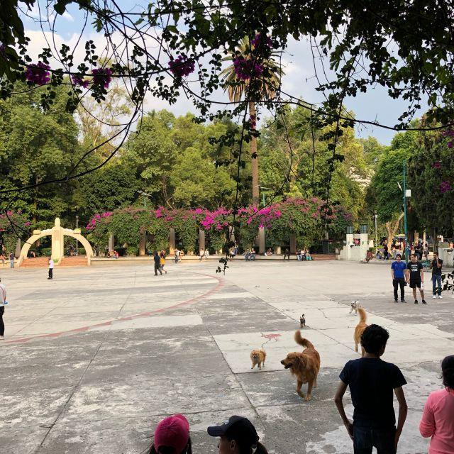 Buntes Leben im Parque España (La Condesa)