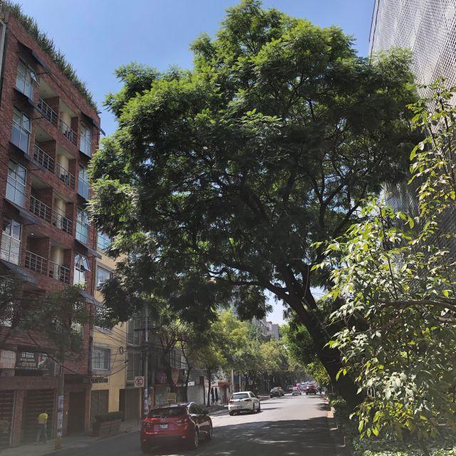 Die meisten Straßen in La Condesa sind wunderbar begrünt
