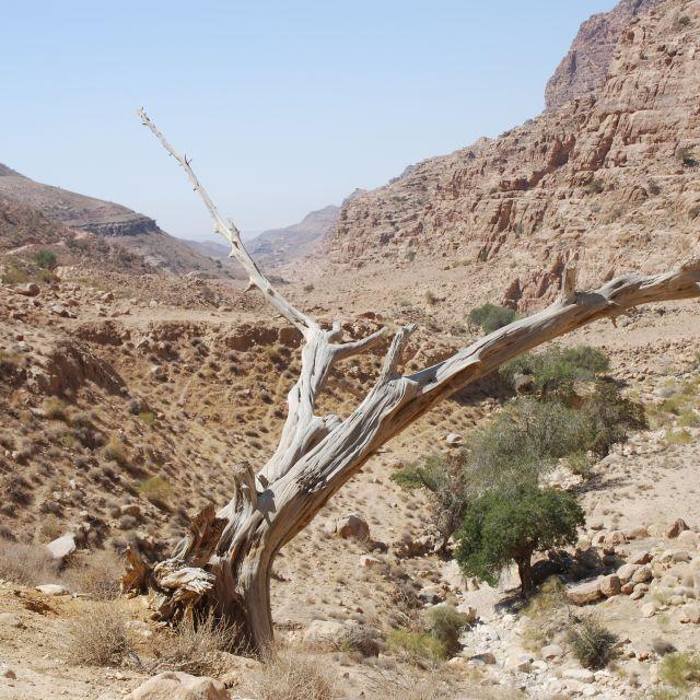 Aride Wüstenlandschaften im Süden, Grüner Norden