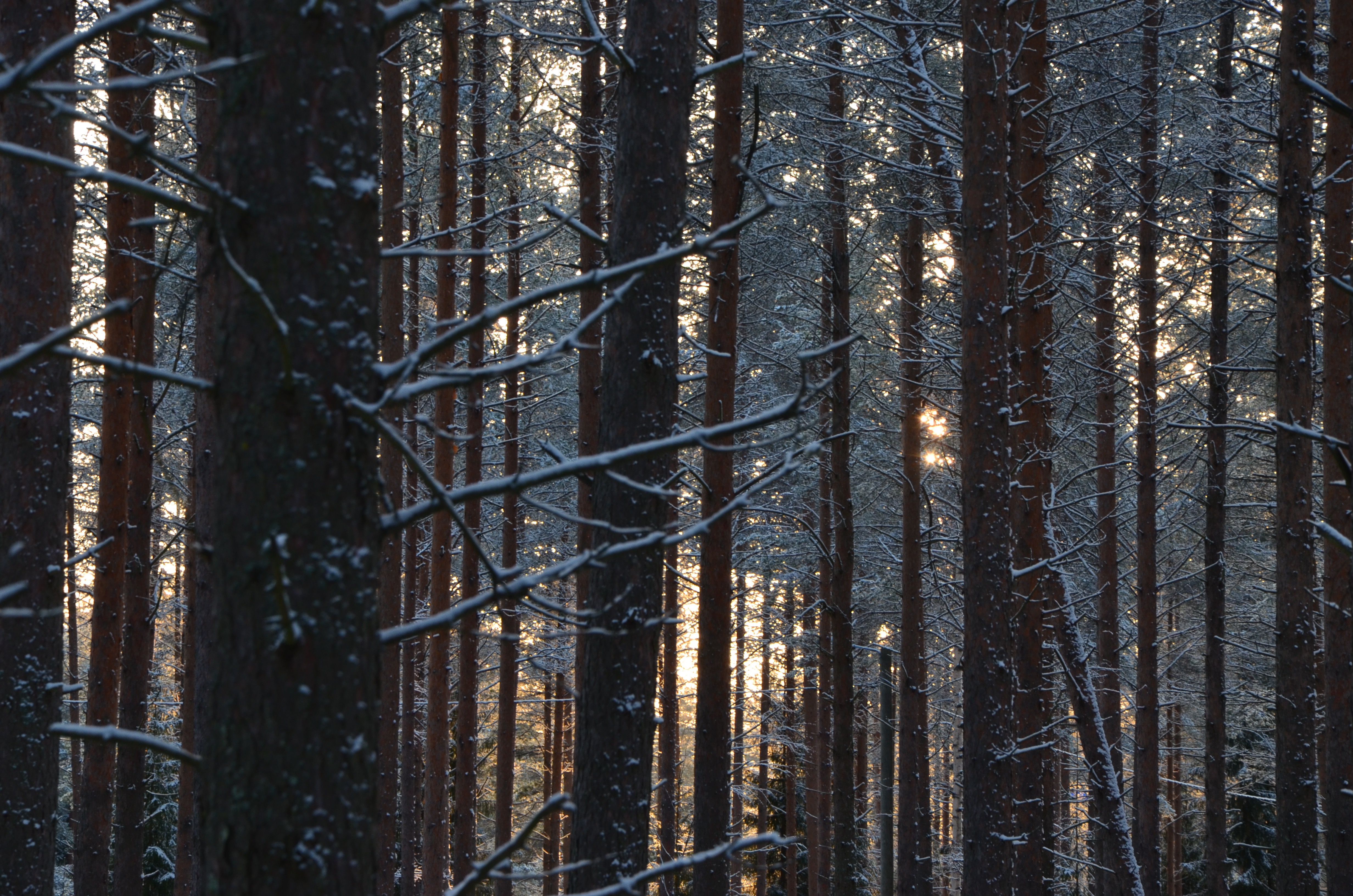Bäume Oulu