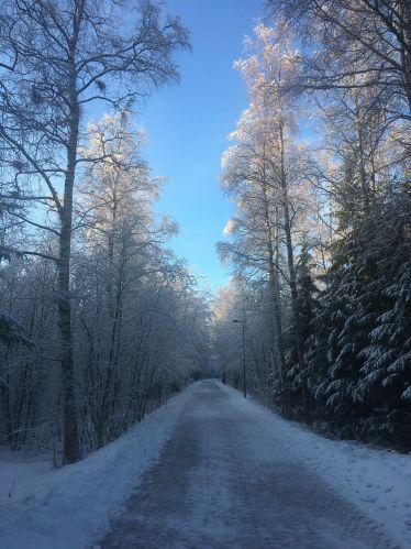 Bäume Weg Finnland kalt