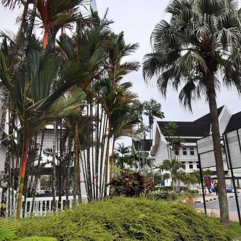 Die UTM Johor Bahru und Palmen.