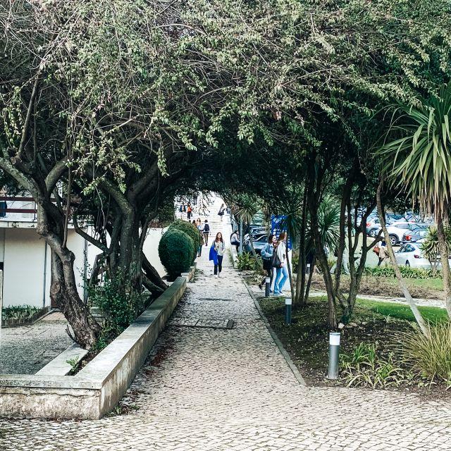 Ein Weg mit Büschen am Rand.