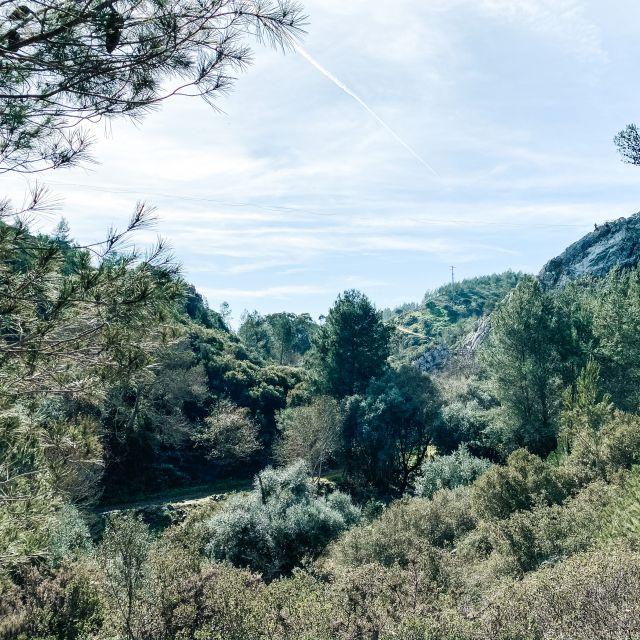 Blick ins Grüne, Büsche und Bäume.