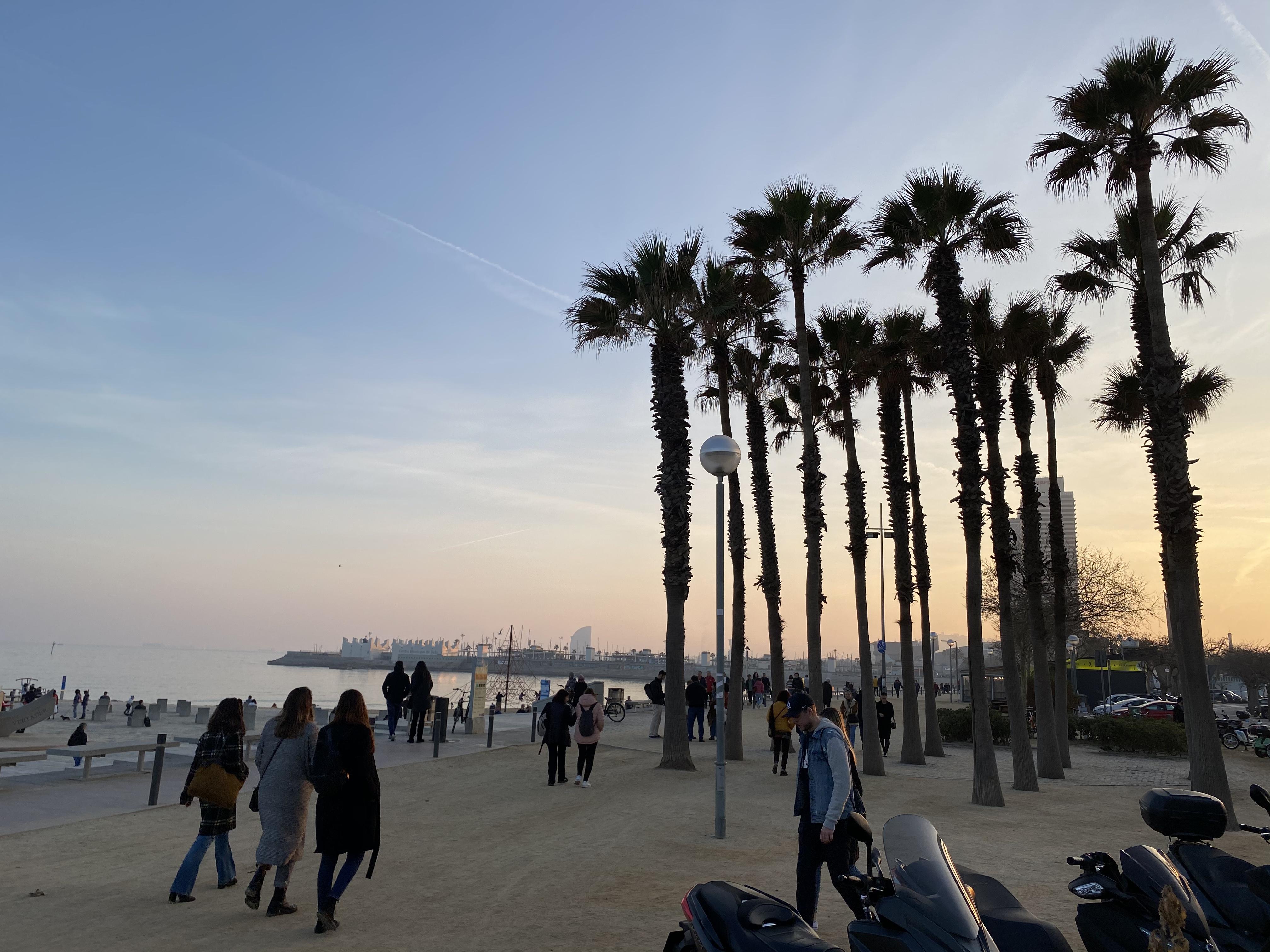 Ein Bild mit Palmen, Strand und Meer während einem Sonnenuntergang
