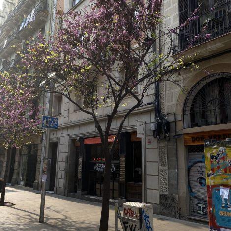 Der Frühling kommt nach Barcelona 🌸…