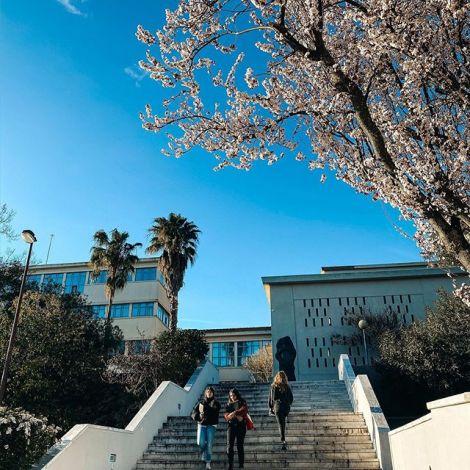 Frühlingsstart an meiner Uni. Ich liebe die ganzen Blumen und Blüten an der…