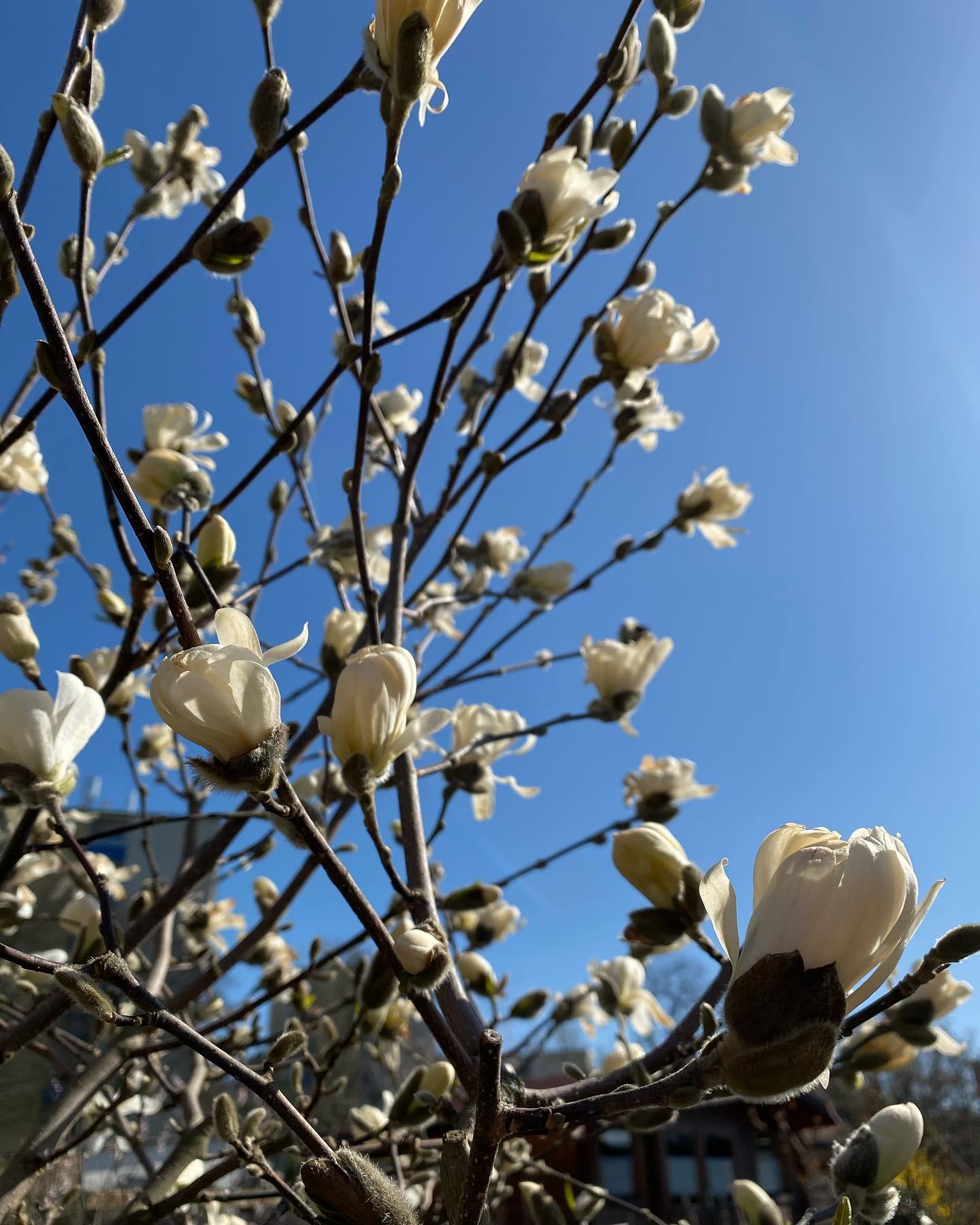 Immerhin scheint die Sonne in Deutschland 🌞 #erlebees #sun #spring